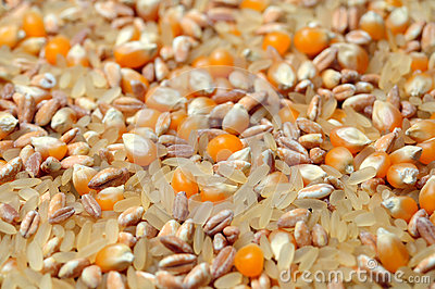 Rice, spelt and maize