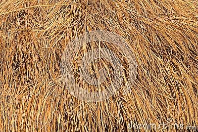 Rice straw background, Thailand