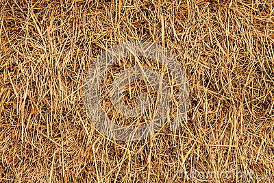 Rice straw background, Thailand