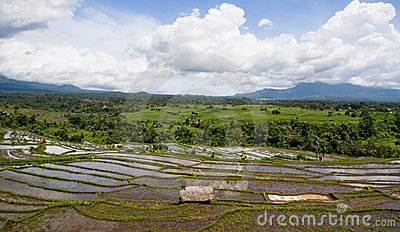 Rice terrace panorama