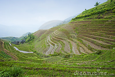 Rice terraces in China