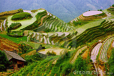 Rice terraces in mounting of Yunnan, China