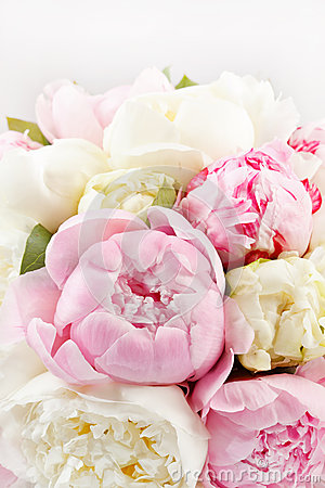 Free Rich Bunch Of Peonies Royalty Free Stock Photos - 24825378