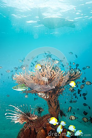 Rich coral with fishes