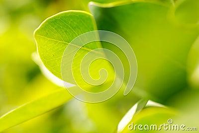 Rich foliage