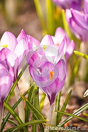 Rich spring flowers
