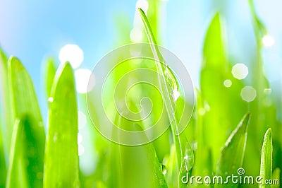 Rich wet grass
