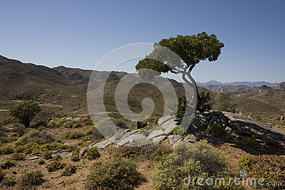 Richtersveld National Park, South Africa.