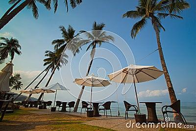 Ricorra sulla spiaggia di paradiso con le palme