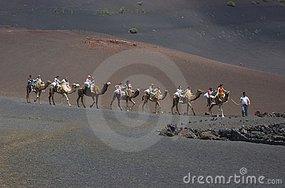 Ride with camels on Lanzarote Editorial Photo