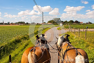 Ride Through the flemish fields with horse and covered wagon.