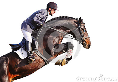 Rider on bay horse in jumping show, isolated