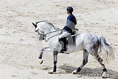 Rider on grey horse