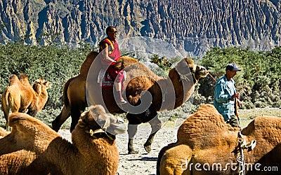 Riding Camel Editorial Photo