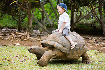 Riding Giant Turtle Royalty Free Stock Photos - Image: 7470818