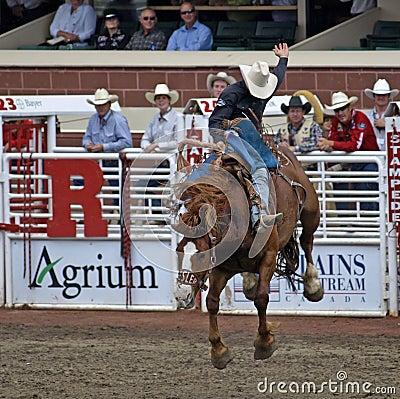 Riding high. Editorial Stock Photo