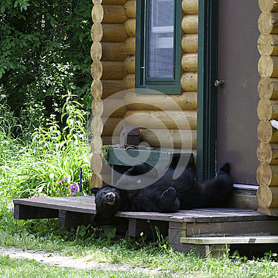 Riguardi il portico della cabina
