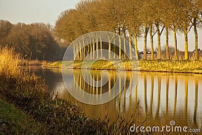 Rij van Bomen