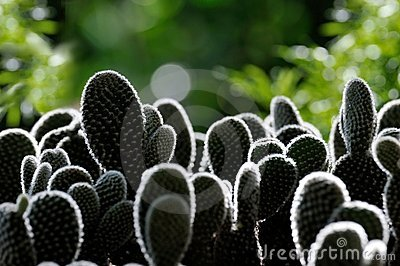 Rim Light Around Cactus