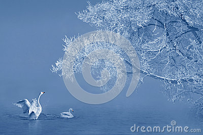 Rime And Swans