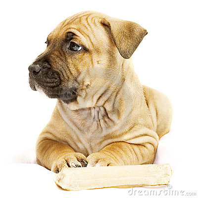 Free Rimpled Puppy Stock Photography - 413902