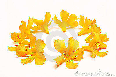 Ring of yellow flowers