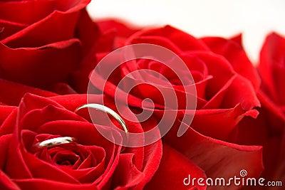 Rings inside of Red Rose