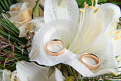 Rings on orchid
