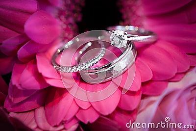 Rings on purple flower