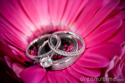 Rings on purple flower