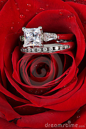Rings in red rose petals