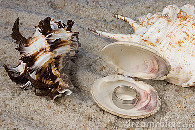 Rings in Seashell