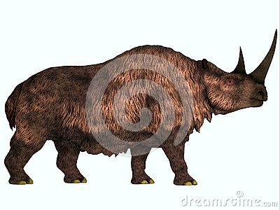 Rinoceronte lanoso en blanco