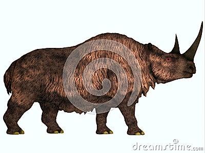 Rinoceronte lanoso su bianco
