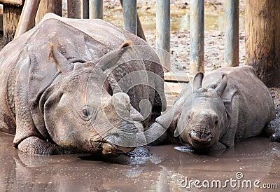 Rinoceronte y bebé