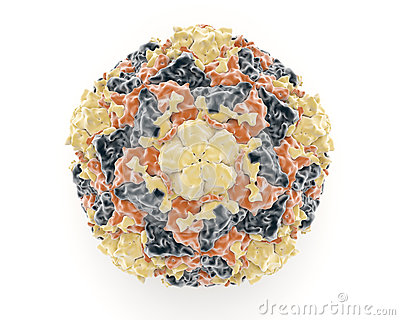 Rinovirus