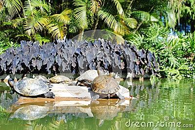 Rio de Janeiro - Fauna en Flora (3)