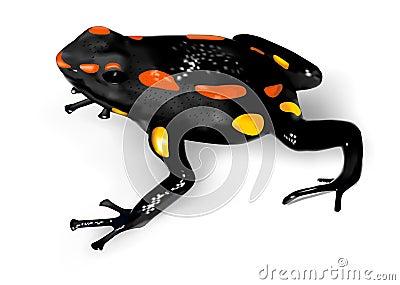 Rio Santiago Poison-Dart Frog