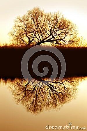Free Riparian Willow Reflection Royalty Free Stock Photo - 2361885