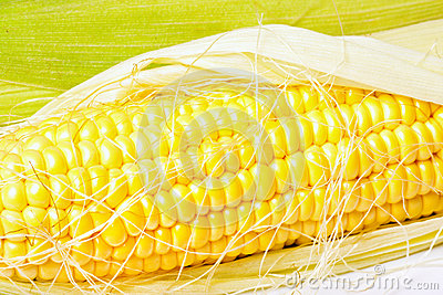 Ripe appetizing corn.