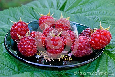 Ripe appetizing raspberry