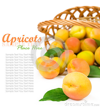 Free Ripe Apricots With A Basket Stock Photography - 31826032