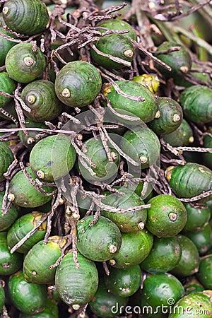 Ripe areca-nut