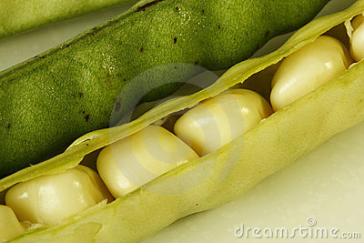 Ripe beans in its pod