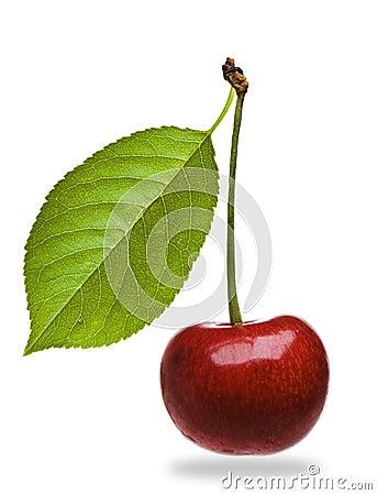 Ripe bing cherry