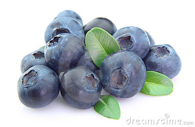 Ripe blueberry with life