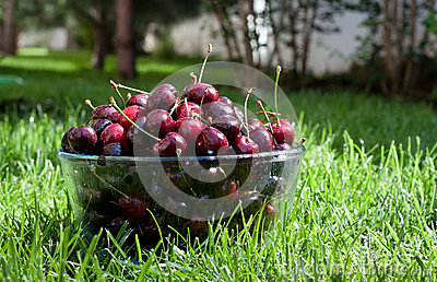 Ripe cherries in a bowl on the grass