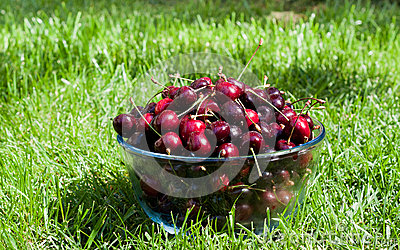 Ripe cherries with sparkling water drops in a glass bowl on the