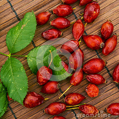 Ripe dog rose fruit