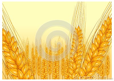 Ripe ear wheat